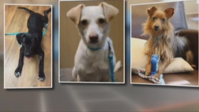 Hannah the Pet Society accused of killing adoptable dogs