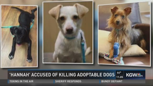 Pet company accused of killing adoptable dogs