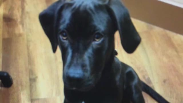 Former owner says euthanized dog was great with kids