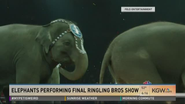 Elephants performing final Ringling Bros. show