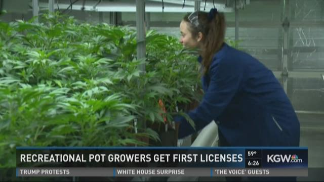 Recreational pot growers get first licenses