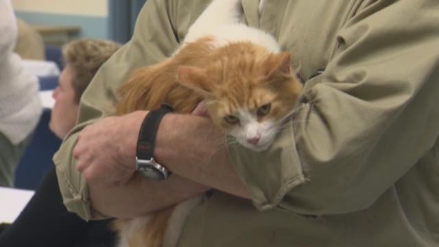 Cats rehabilitated by inmates
