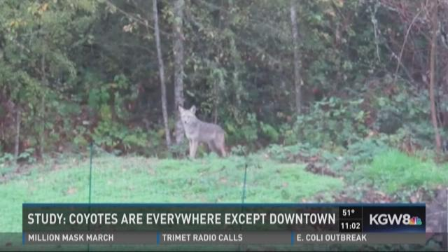 Neighbors meet in Northwest Portland to discuss coyotes.