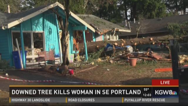 Falling tree kills SE Portland woman